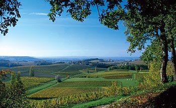 View of Bergerac wine being grown