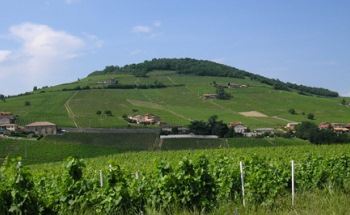 domaine de bel air in the Beaujolais region